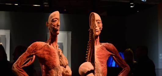 Zasoutěžte si s námi o vstupenky na výstavu Body The Exhibition!