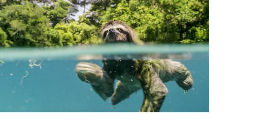Jak probíhá den ve světě zvířat? BBC přichází s novým snímkem Earth: Den na zázračné planetě