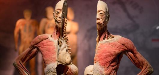 Do Česka dorazí výstava složená z exponátů ze skutečných lidských těl