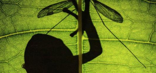 Národní muzeum zahájí v létě přírodovědnou výstavu Světlo a život