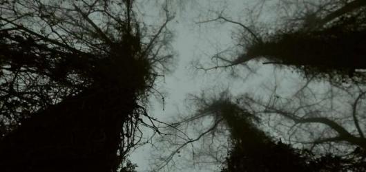 Retrospektiva Dany Puchnarové a lesní krajiny. Galerie GASK uvedla nové výstavy