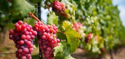 5 pražských vinobraní, na kterých si nejen přiťuknete, ale také se královsky pobavíte