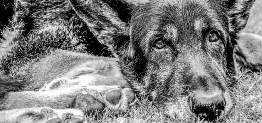 SOUTĚŽ: Vyhrajte knížku Egon: Děsná psina blogerky Petry Baďurové s osobním věnováním