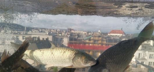 Víkendové akce v Praze: adventní střecha Lucerny, divadelní festival i přehlídka malých nakladatelů