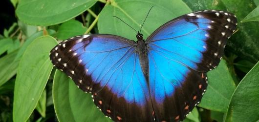 Motýlí cestovatelé zaplnili skleník Fata Morgana v trojské botanické zahradě