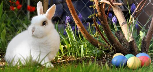Velikonoce stokrát jinak: jak se slaví u sousedů i na opačném konci světa
