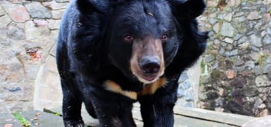 Medvědi na hradech a zámcích aneb kam se za nimi můžete vypravit