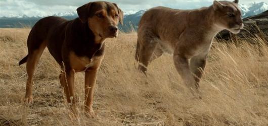 Lassie se nevrací. Psí domov se snaží prázdnými gesty a štědrou dávkou kýče dohnat diváka k slzám