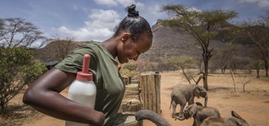 Naděje vs. vyhynutí. Ami Vitale vrací do Čech nejznámější příběh čtyř bílých nosorožců