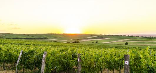 Přehled vinobraní na Moravě: kam za dobrým vínem a kulturním programem?