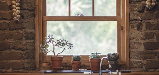 Knihy, které by neměly chybět na poličce žádnému milovníku rostlin