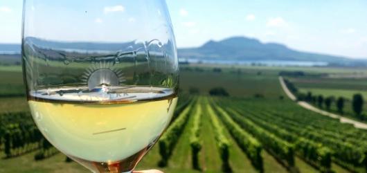 Bude letos Praha bez vinobraní? Nabídka se výrazně zužila, metropole o oslavu vína ale úplně nepřijde