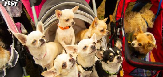Na Dogfestu se předvedou celní i záchranářští psi, chybět nebudou závody plemen či dog dancing