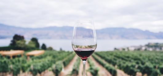 Smutný podzim bez vína? Velké akce se ruší, menší vinobraní jsou stále ve hře