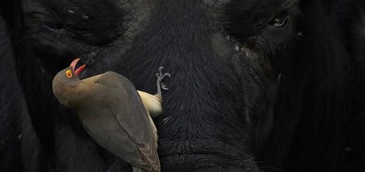 Porotci soutěže Czech Nature Photo, Peter Delaney a Rob Cottle, představují fotografie zvířat