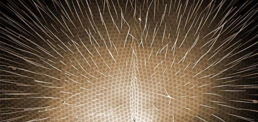 Jarní výstavy ve Slezsku: Pasta Oner, protesty v Británii i hmyz pod mikroskopem