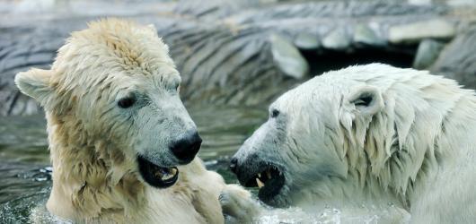 Zoologické a botanické zahrady znovuotevírají své brány. Za jakých podmínek?