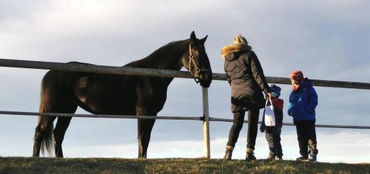 Výlety s dětmi: Do Slatiňan za známým chovem koní, Kočičím hrádkem i rozhlednami