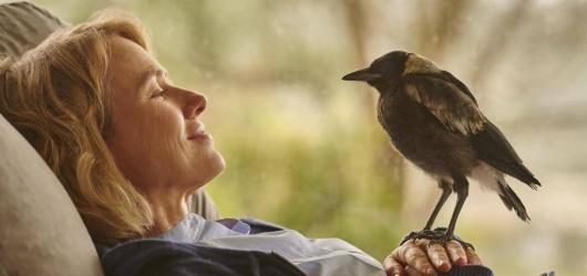 Penguin Bloom, speciální Euforie nebo skandinávské filmy. Přinášíme kulturní tipy na týden od 25. do 31. ledna
