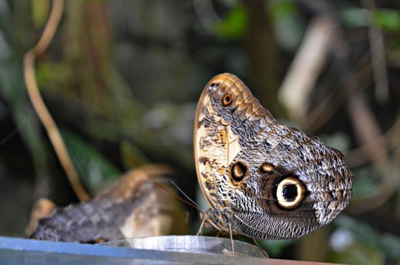 Tropičtí motýli opět poletují v trojské botanické zahradě