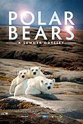 Polární medvědi